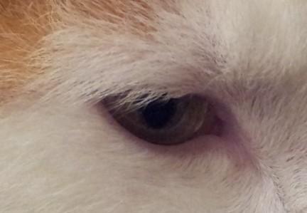 Consuela's eye